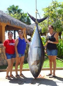 367-lb-Tuna-Gordo-Banks-Pangas