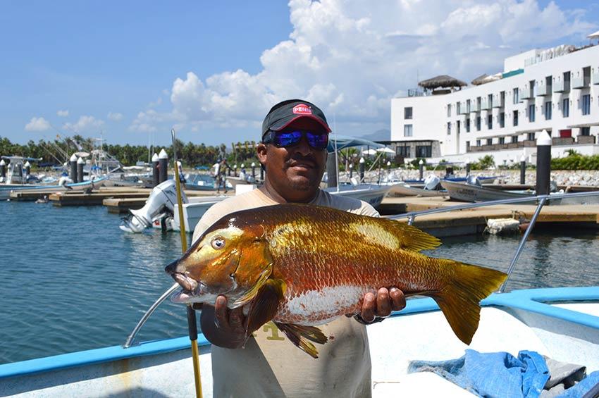 Gordo banks fish report 27 september 2013 cabo fish reports for San jose del cabo fishing report