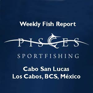 Cabo fish reports cabo san lucas san jose del cabo los for Pisces fishing cabo