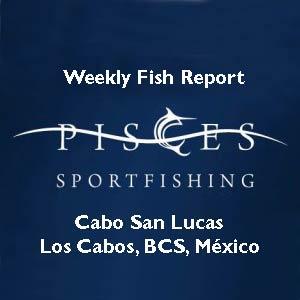 Pisces Sportfishing Cabo San Lucas