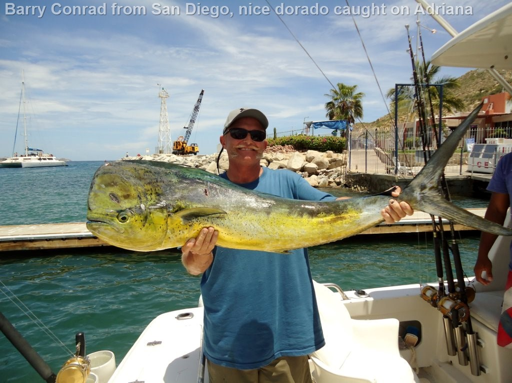 Cabo san lucas cabo fish reports cabo san lucas for Cabo san lucas fishing report