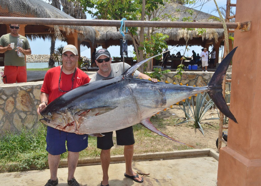 Gordo banks pangas fish report to august 14 2015 los for San jose del cabo fishing report
