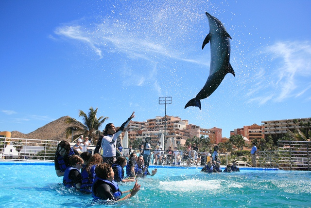 Cabo Dolphins - Swim with Dolphins - Cabo San Lucas, Los ...