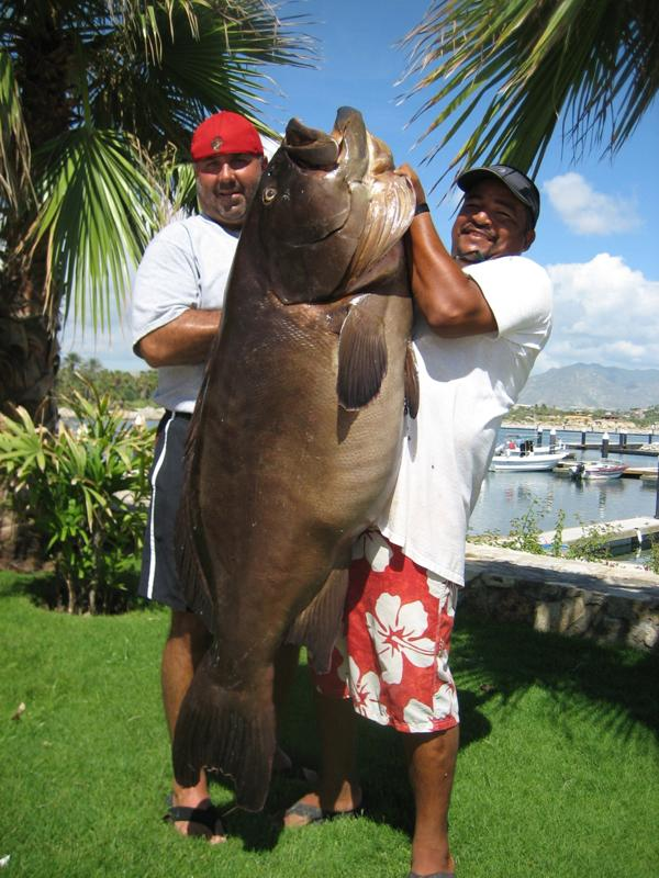 Gordo banks pangas san jose del cabo los cabos mexico for San jose del cabo fishing charters