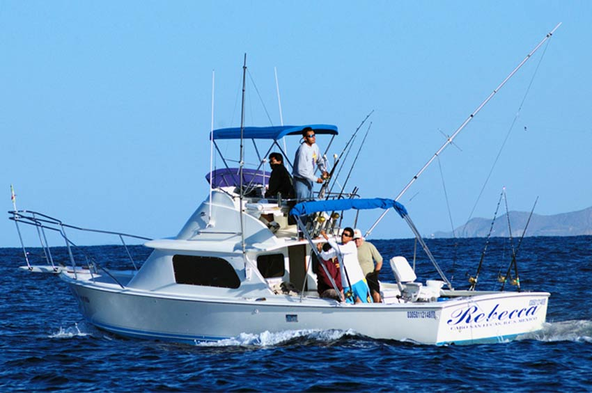 Cabo san lucas fishing sport fishing in cabo san lucas for Cabo san lucas fishing charters