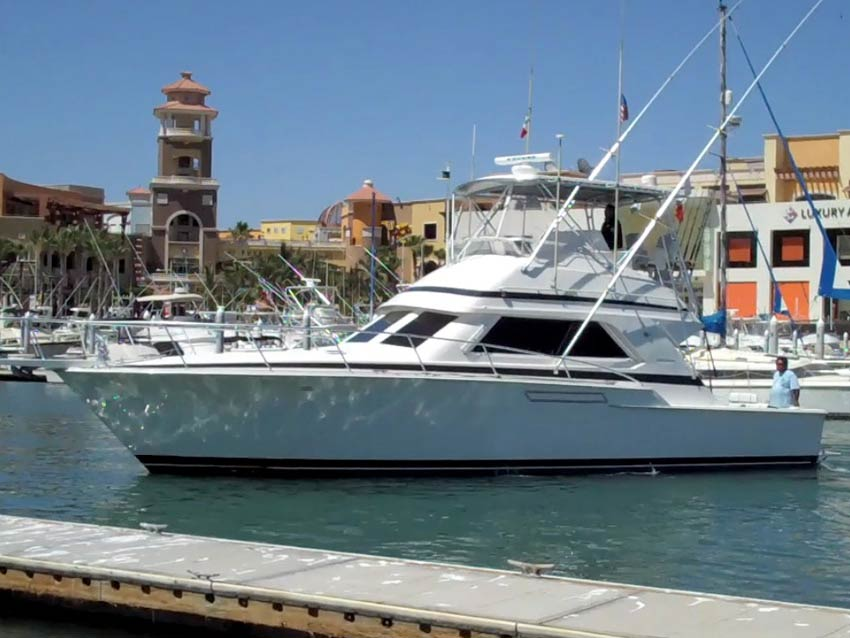 Slippery lizzard sportfishing cabo san lucas los cabos for Los cabos fishing charters