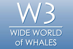 W3 Gallery - Marine Animals Design Jewelry - Cabo San Lucas, Los Cabos, Mexico
