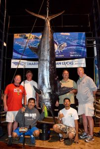Blue Marlin, 684 pounds caught on Bad Medicine in Cabo San Lucas, January 20, 2015. Photo: Mario Banaga.