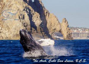 Cabo Trek, Cabo San Lucas, Los Cabos, Baja California Sur, México
