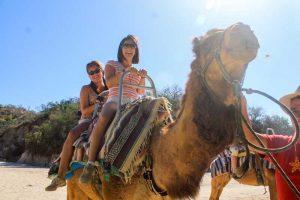 Camel Quest, Cabo San Lucas, Los Cabos, Baja California Sur, México