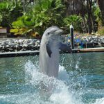 dolphin-discovery-6