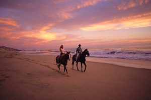 horses. Horseback ride on a Cabo beach at sunset