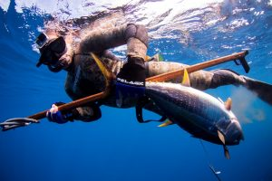 Spearfishing Baja