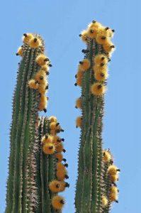 Flora and Fauna Los Cabos