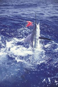 marlin-striped-jumping-lure-277_020047-2