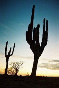 sunset-los-cabos-photomexicio-nv000278-2
