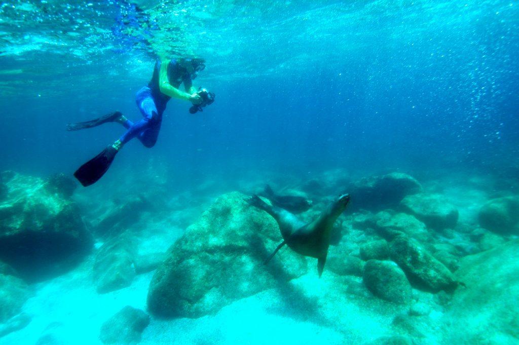 Sea Lions Mating Season Espiritu Santo La Paz MX