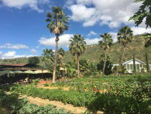 Flora Farm and Field Kitchen