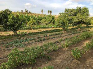 sabor-a-cabo-rural-2017-3615-2
