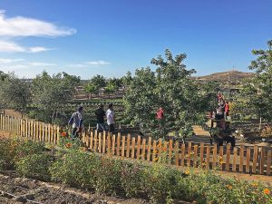 jazamango-gardens-todos-santos-feb-2018-5185-2