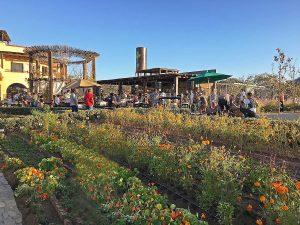 jazamango-gardens-todos-santos-feb-2018-5197-2