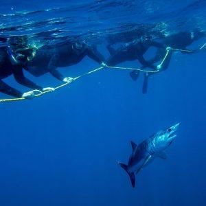 baja-shark-experience-cabo