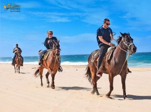 horses-beach-G-Force Adventures-cabo