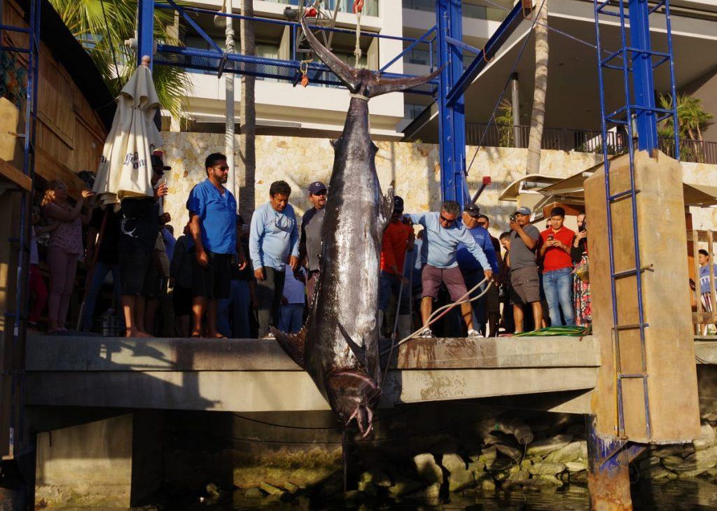Giant Blue marlin