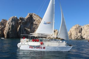 Pez gato Party Cruise Cabo San Lucas