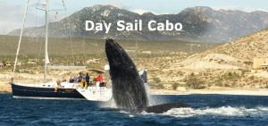 day-sail-cabo-cruise-02580-1