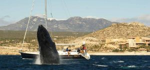 day sail cabo cruise whale Beneteau cruising sailboat