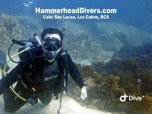 hammerhead-divers-scuba-0798720-2-text