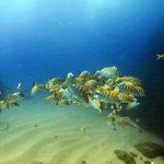 hammerhead-divers-scuba-536832-2
