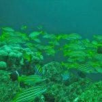 hammerhead-divers-scuba-5530-2