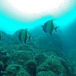 hammerhead-divers-scuba-fish-427652-2