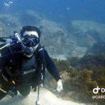 hammerhead-diversscuba-0798720-2