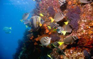 andromeda-divers-scuba-cabo-02