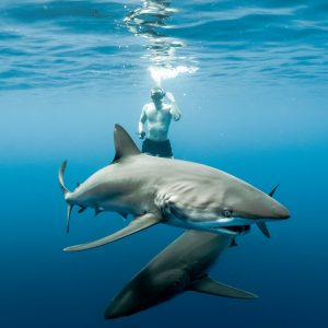 baja-shark-experience-01