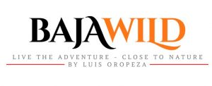 baja-wild-logo-02