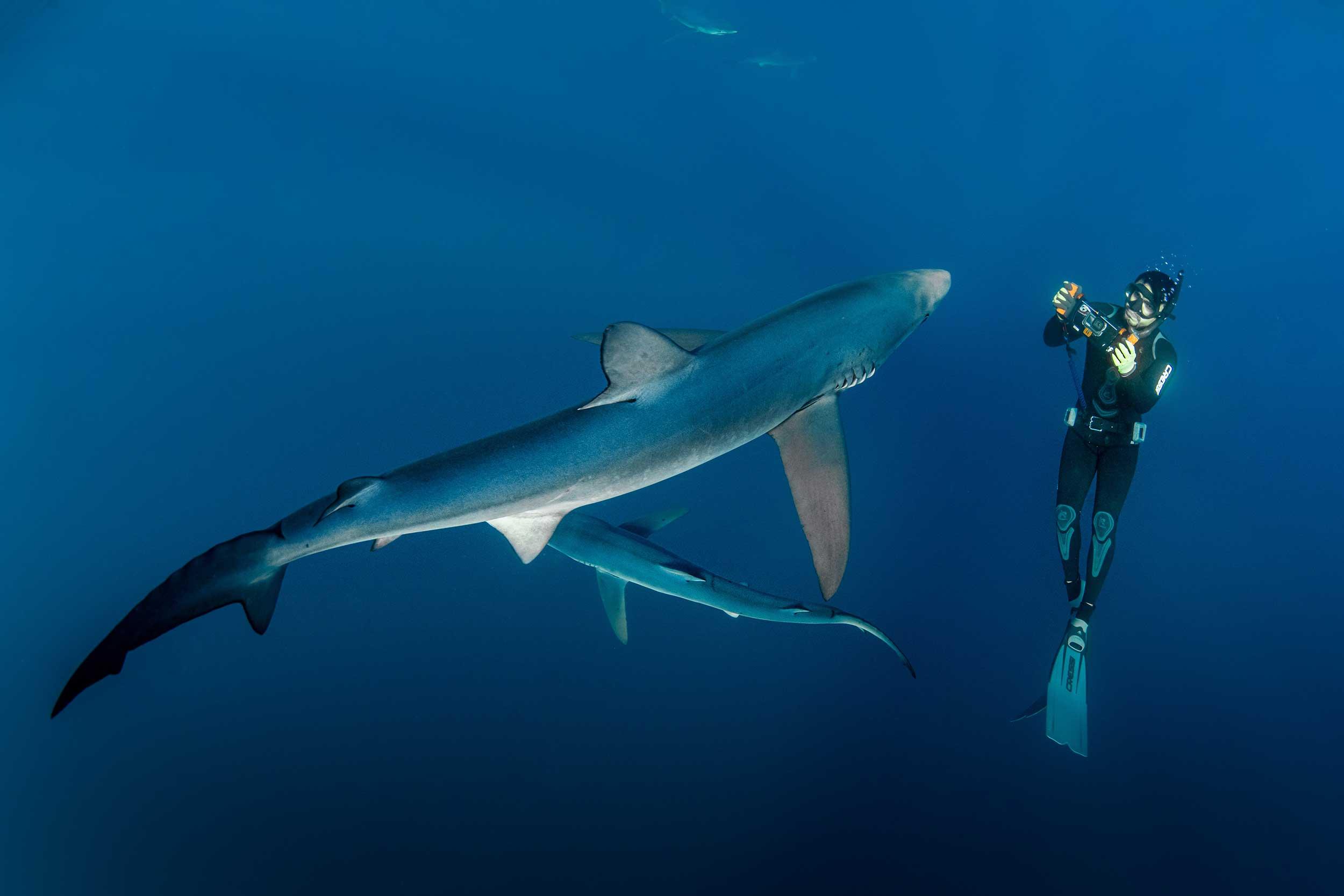 Baja Shark