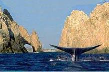 zoe-builders-whale