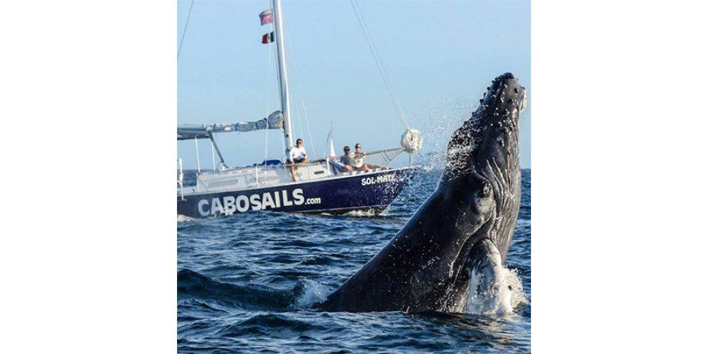 Cabo Sails Premier Blog